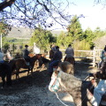 HORSEBACK RIDING AT HANECK